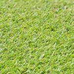 07 - Creeping Bentgrass