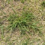 16 - Rescuegrass