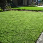 56 - Zoysia-Grass