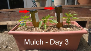 Day3---mulch