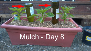 Day8---mulch