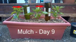 Day9---mulch