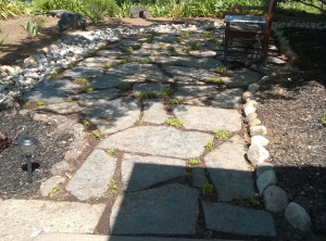 Ground cover between flagstone.