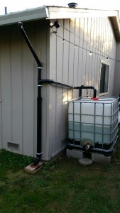 Gutter to 275 gallon IBC tote.