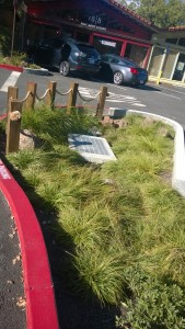 Bioswale in parking lot.