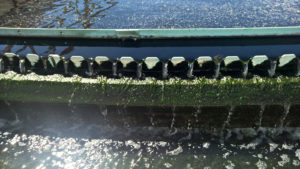 Clear water trickles over a clarifier weir.