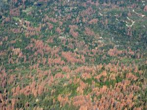 66 million dead trees.
