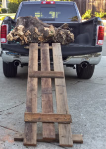 Rolled stump into truck.
