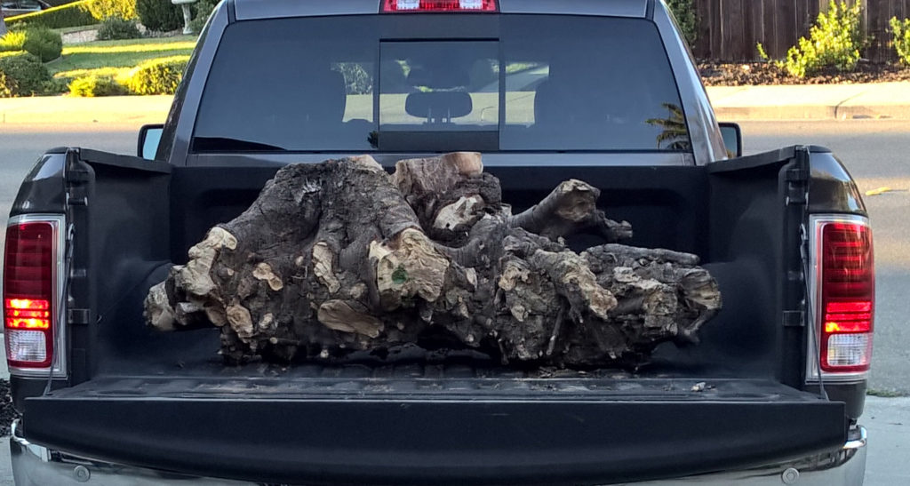 Part of birch tree stump in truck.