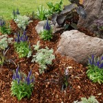 flowerbed-with-mulch