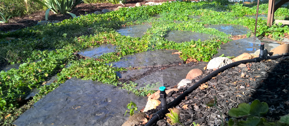 Recycled water plumbed to above ground irrigation system